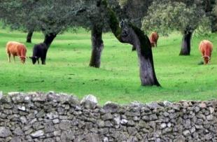 Los agentes forestales de Monesterio desarrollan una campaña sobre cercados de fincas