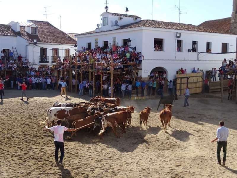 Conocidos los ganaderos que cederán las vacas para las Capeas 2016 en Segura