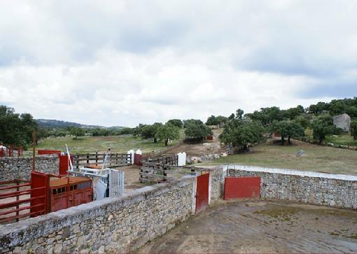 Torregrande, ganadería para el certamen de novilladas de Diputación