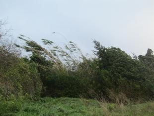 Hoy domingo, de 15h a 20h, alerta amarilla por vientos en la comarca de Tentudía