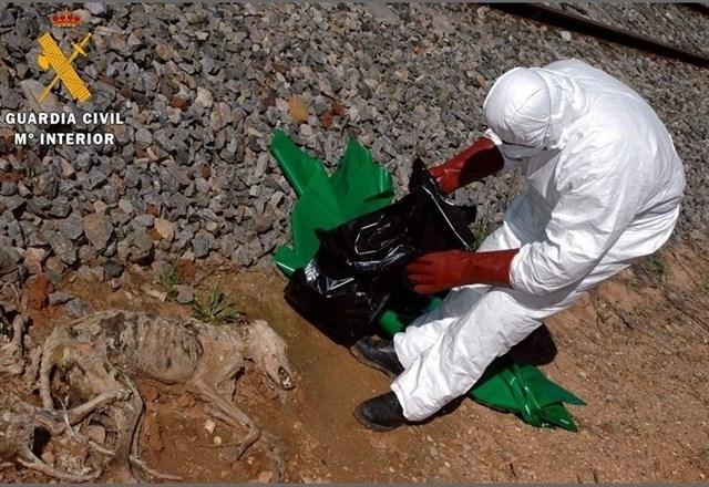 Un vecino de Usagre condenado tras descubrirse cinco cadáveres de galgos por el Seprona de Fuente de Cantos