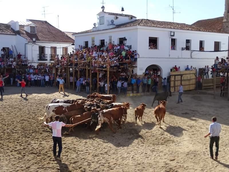 Conocidos los ganaderos que cederán las vacas para las Capeas 2017 en Segura de León