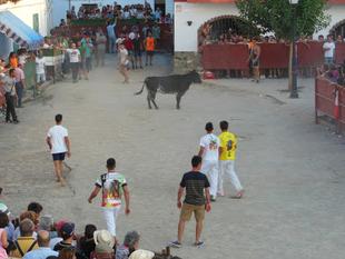 Mucha expectación y buen ambiente en la Capea celebrada ayer en Bodonal de la Sierra