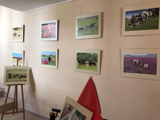 La exposición fotográfica ''Toros y Dehesa de Extremadura'' llega a Segura de León
