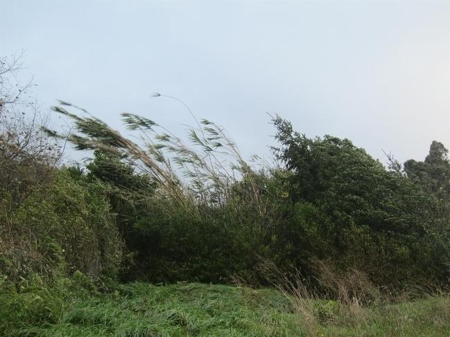 Fuente de Cantos registra rachas de viento de 79 km/h, las mayores de Extremadura