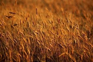 Las ayudas para financiar préstamos a titulares de explotaciones agrícolas y ganaderas extremeñas ya se pueden solicitar