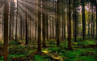 La UCE llama a la responsabilidad de todos los extremeños para que evitemos los incendios forestales