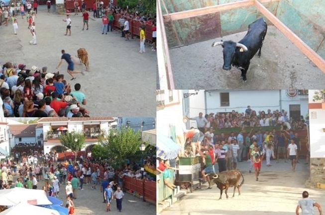 Bodonal celebra sus Fiestas de Santa María con el regreso de la capea de niños y dos capeas de mayores