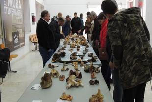 Numerosas personas participan en las Jornadas Micológicas de Monesterio