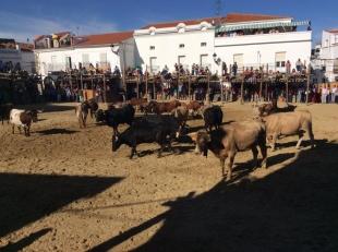 Este año NO habrá Capeas en Segura de León