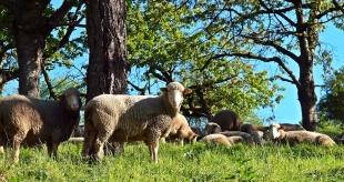 Todo lo que debes saber sobre la ganadería ecológica