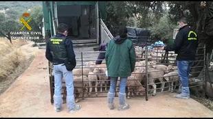 Un ganadero de Calera de León detenido en el marco de la Operación Tirolo